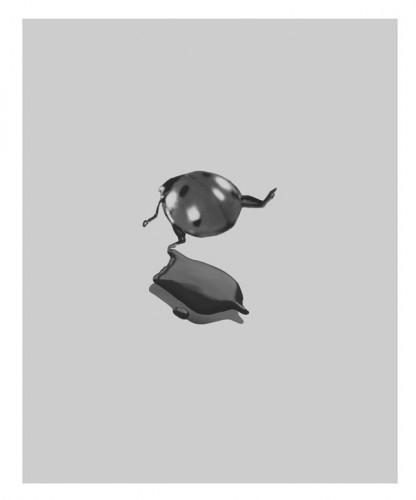 Liquid TV and Insect No.03, 2002 - Tirage argentique 47 x 41 cm 13 exemplaires