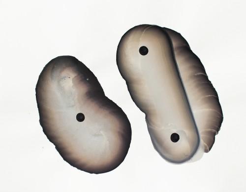 Sans titre - 2015, encre et gouache sur papier, 56 x 76 cm